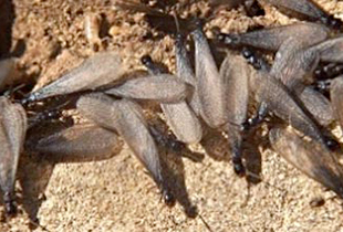 Different Types Of Termites News Infestation Updates Gallura Disinfestazioni